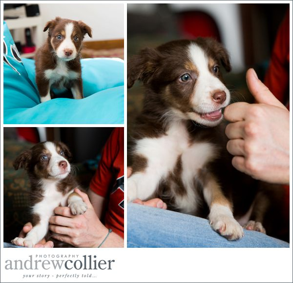 broc-the-collie__0005