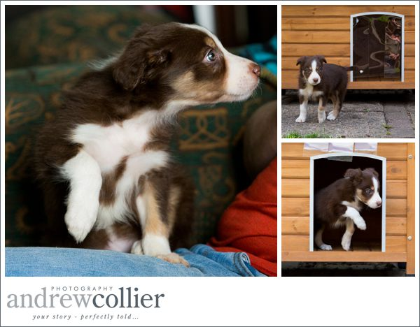 broc-the-collie__0006
