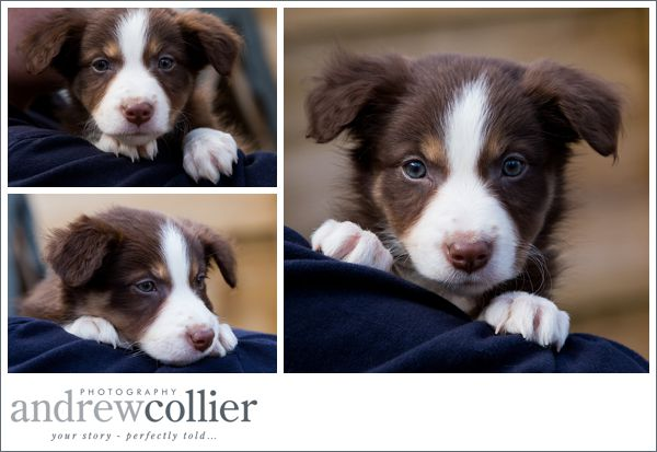 broc-the-collie__0008