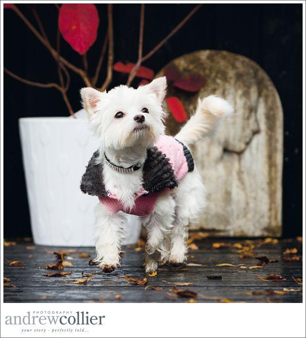 dog-photographer-warrington_0004
