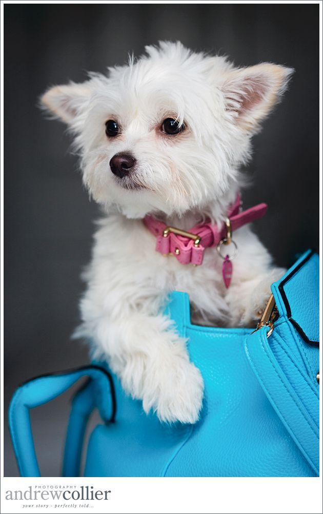 dog-photographer-warrington_0005