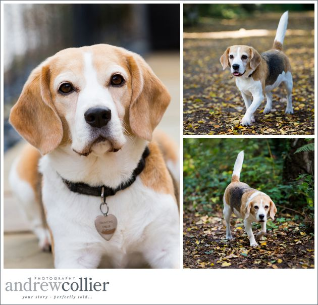 Pet-portrait-photography-Cheshire_0001