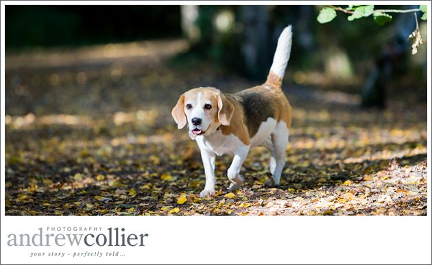 Pet-portrait-photography-Cheshire_0002