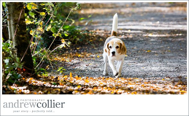 Pet-portrait-photography-Cheshire_0003