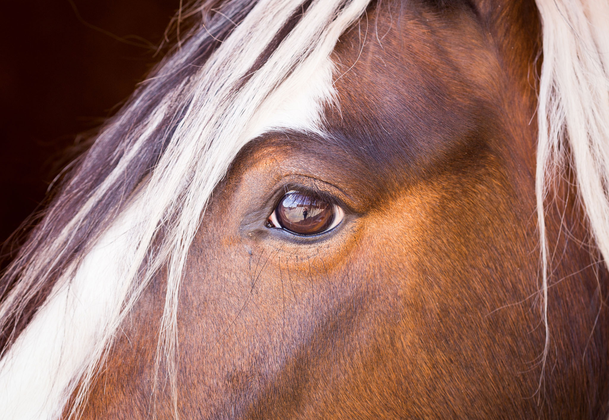 Close up equine portrait photograph of Gypsy Cob in Manchester by Cheshire based horse photographer, Andrew Collier Photography