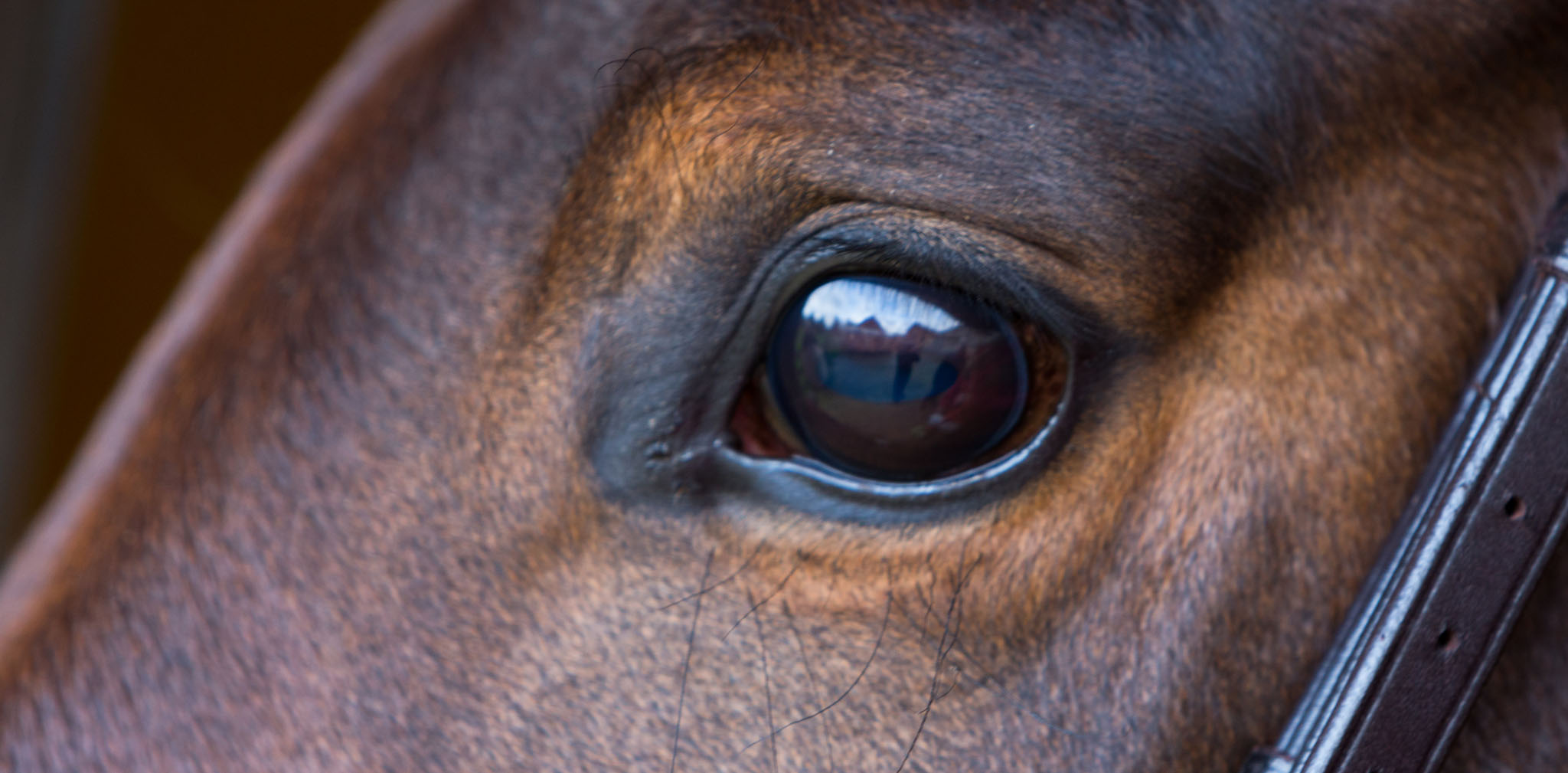 Equine portrait photography in Holmes Chapel by Cheshire based horse photographer, Andrew Collier Photography