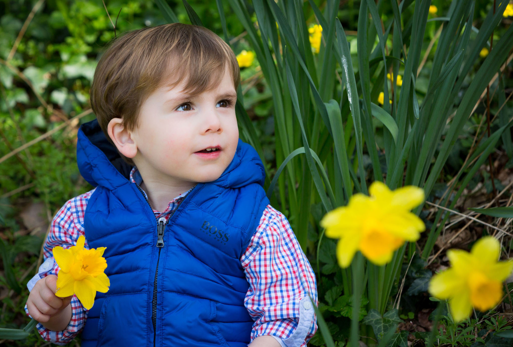 Portrait of a young boy sitting amongst daffodils in Lymm Cheshire