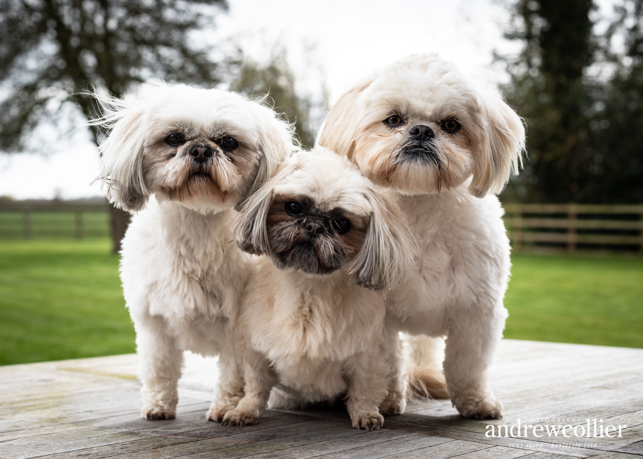 A portrait photo of three shiatsus in Tarporley, Cheshire