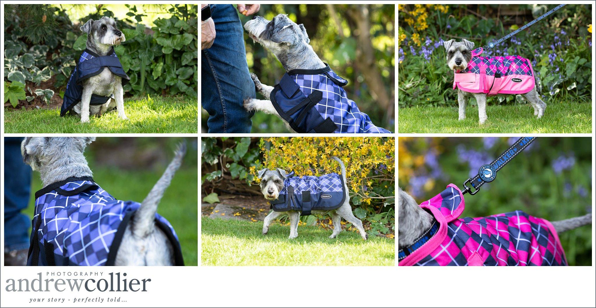 Lifestyle dog product photography of dog Cheshire