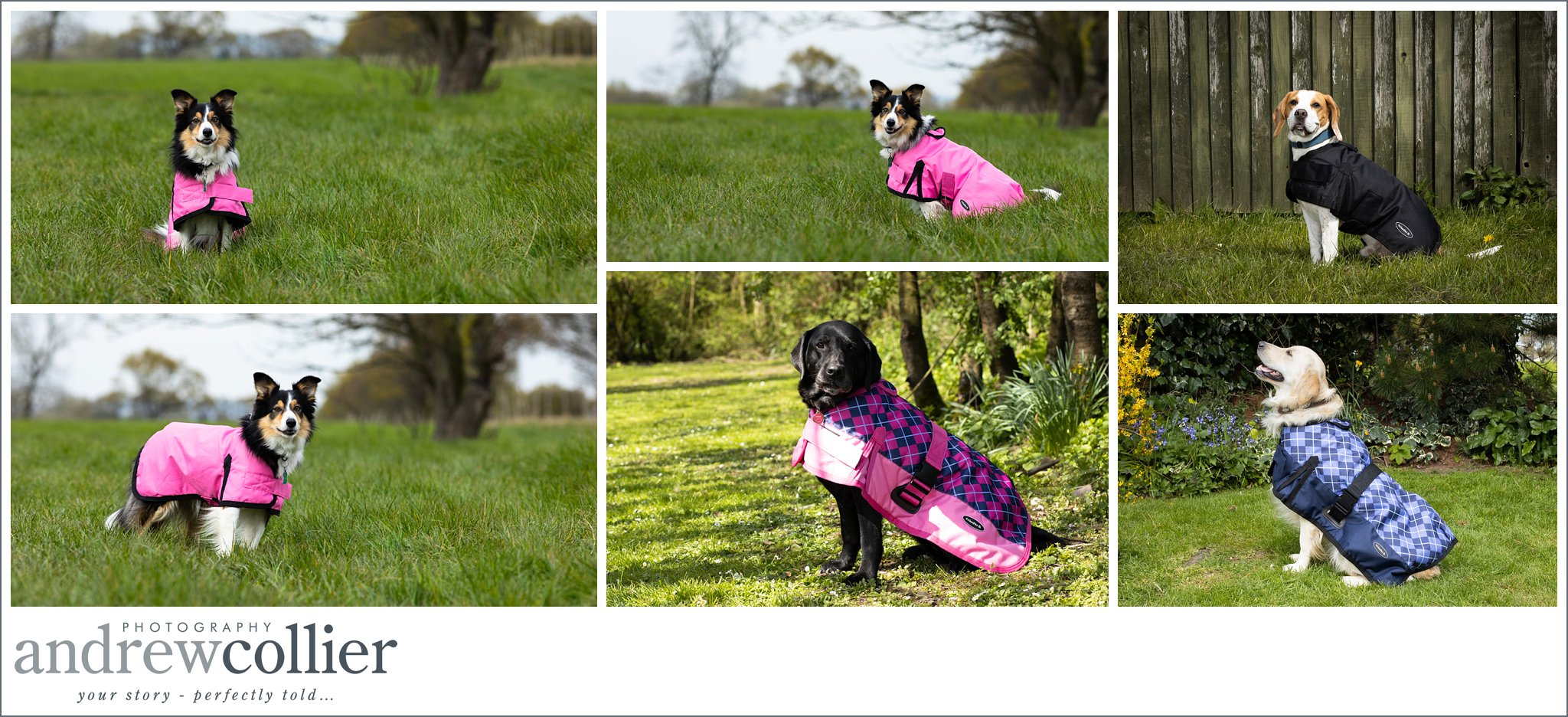 Lifestyle pet product photography of dog clothes