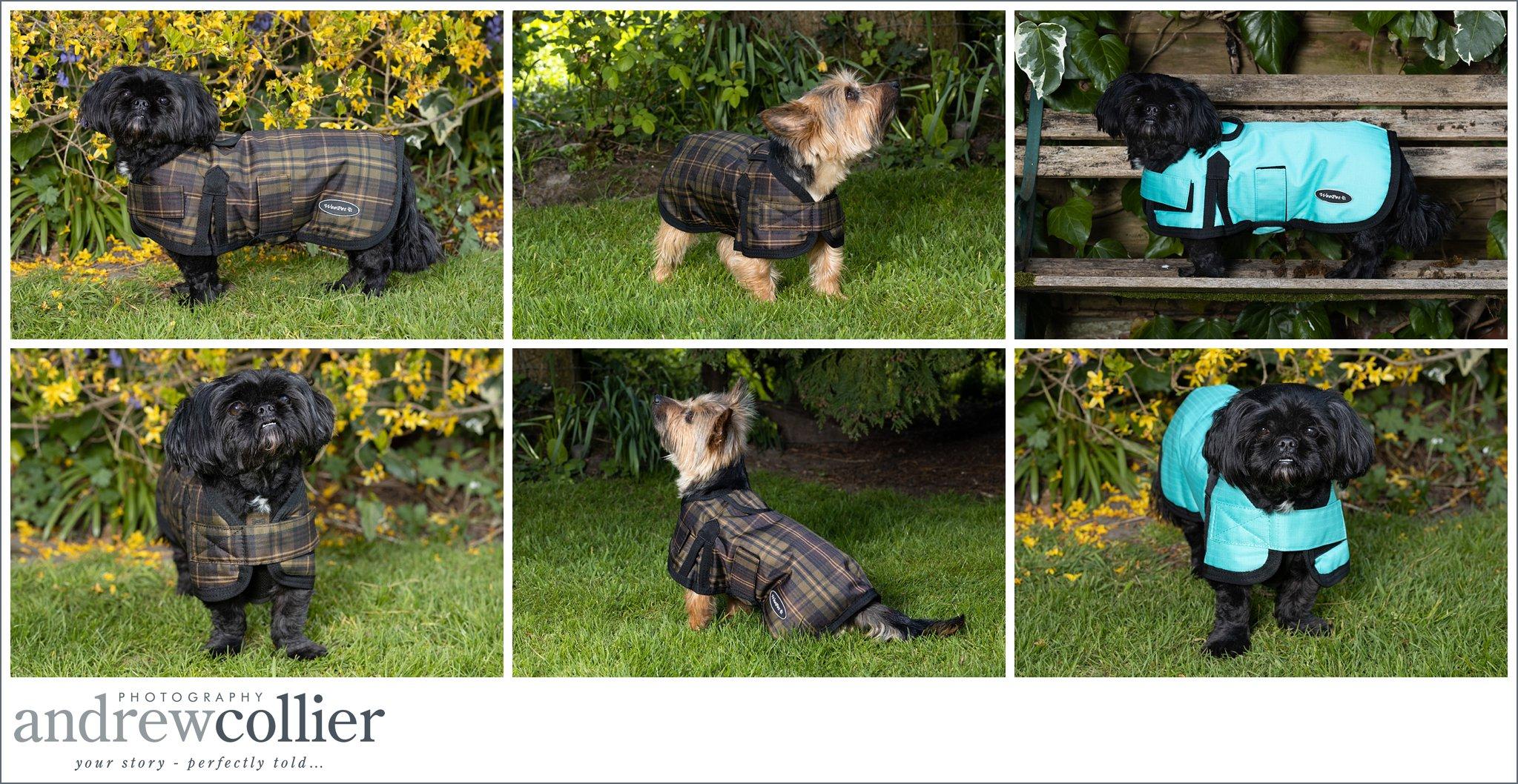 Lifestyle pet product photography of dog clothing