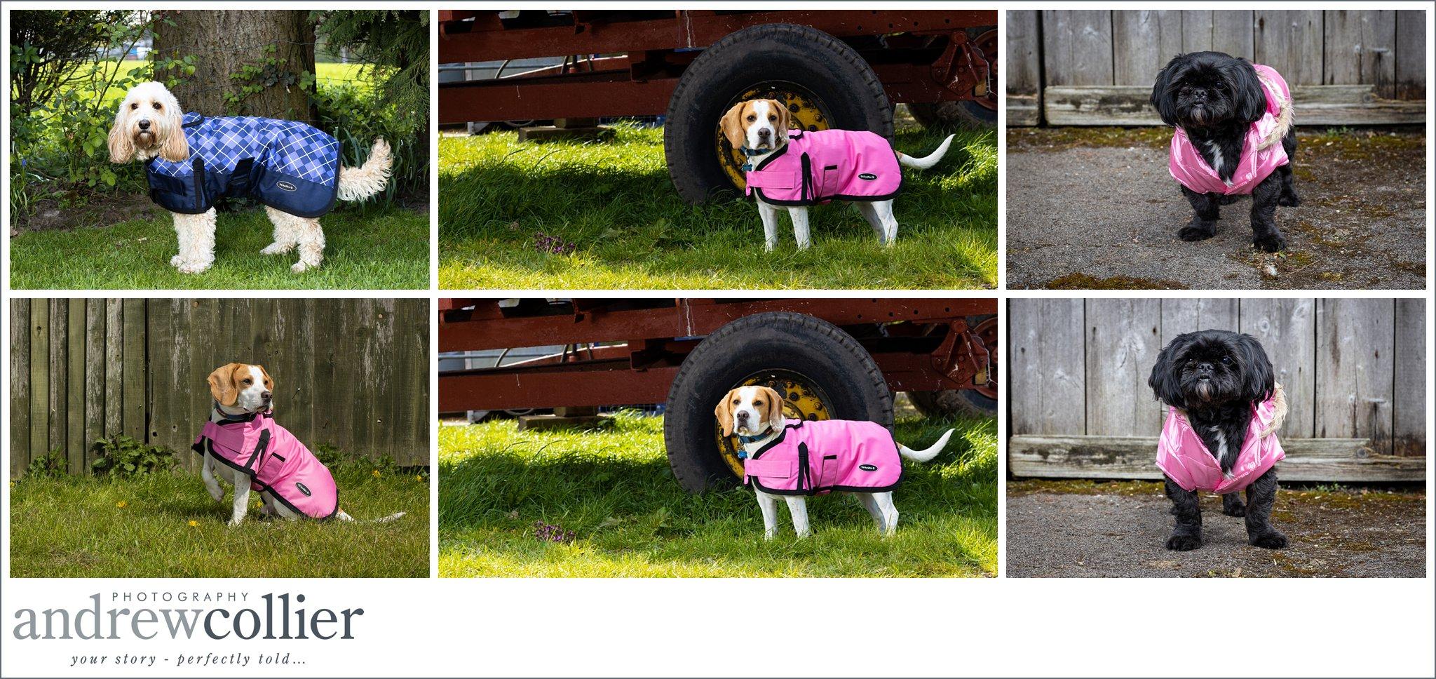 Lifestyle pet product photography of dog jackets