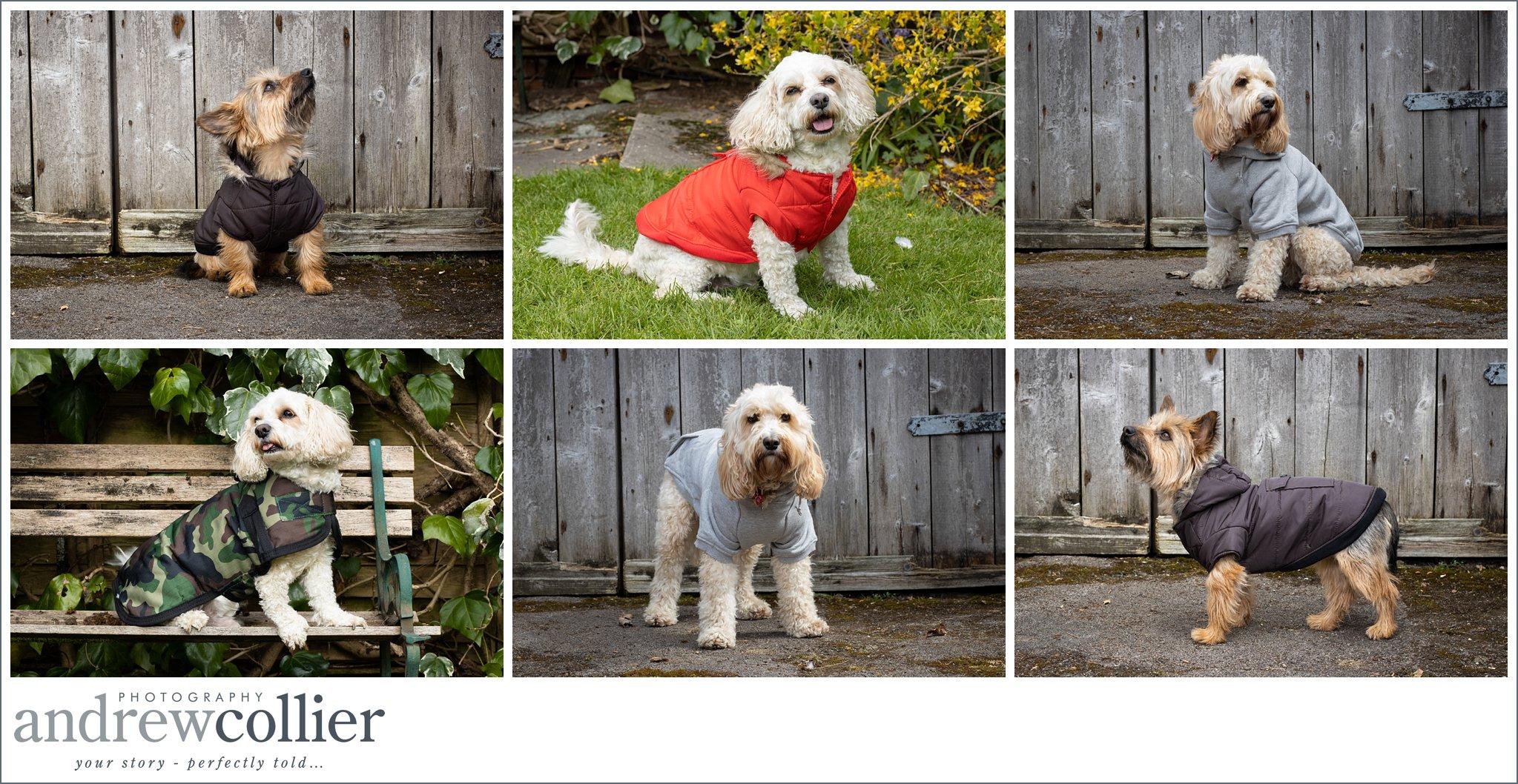 Lifestyle pet product photography of dog coats