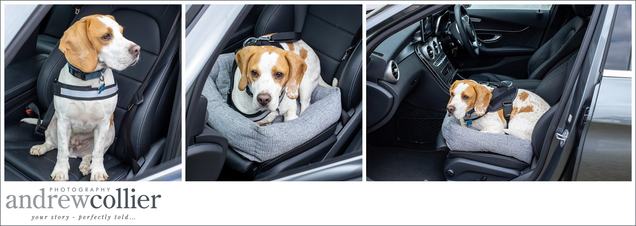 Lifestyle pet product photography North Wales
